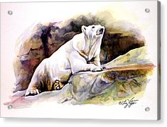 Resting Polar Bear Acrylic Print by Liz Viztes