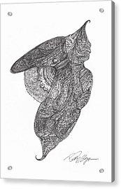 Revelation Drifter Acrylic Print by Dan Heynen