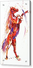 Reverie Acrylic Print by Penny Warden