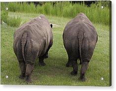 Rhino Rears Acrylic Print by Kristin Smith
