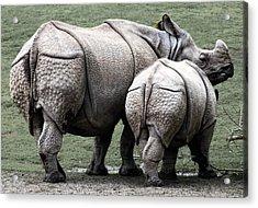 Rhinoceros Mother And Calf In Wild Acrylic Print by Daniel Hagerman