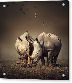 Rhino's With Birds Acrylic Print by Johan Swanepoel
