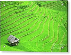 Rice Field Terraces Acrylic Print by MotHaiBaPhoto Prints