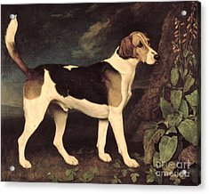 Ringwood Acrylic Print by George Stubbs