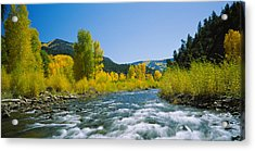 River Flowing In The Forest, San Miguel Acrylic Print by Panoramic Images
