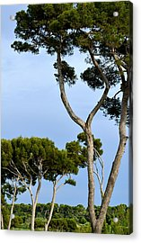 Riviera Trees Acrylic Print by Corinne Rhode