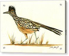 Roadrunner Bird Acrylic Print by Juan Bosco