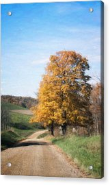 Roadside Tree In Autumn Acrylic Print by Tom Mc Nemar
