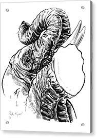 Roaring Elephant Acrylic Print by John Keaton