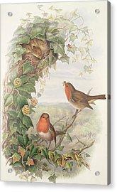 Robin Acrylic Print by John Gould