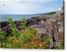 Rocks And Ninebark Acrylic Print by Sandra Updyke