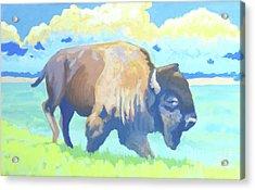 Roosevelt Bull  Acrylic Print by Stephen Wysocki