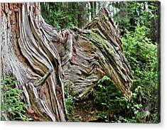 Roots - Welcome To Olympic National Park Wa Usa Acrylic Print by Christine Till