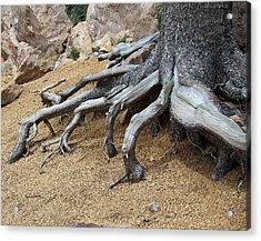 Roots Acrylic Print by Ernie Echols