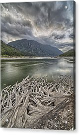 Roots From An Old Stump Acrylic Print by Robert Postma