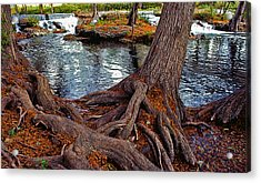 Roots On The River Acrylic Print by Stephen Anderson