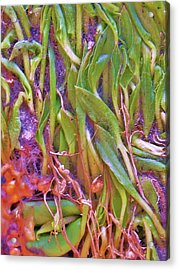 Roots Acrylic Print by Susie DeZarn