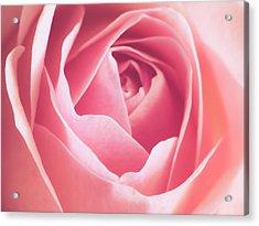 Rosa Acrylic Print by Wim Lanclus