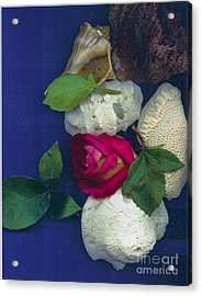 Rose Corals Shell Acrylic Print by Leonor Shuber