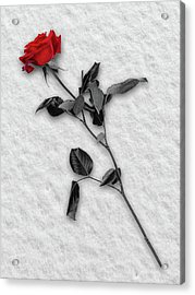 Rose In Snow Acrylic Print by Wim Lanclus
