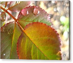 Rose Leaves Acrylic Print by Shirley Sirois