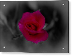 Rose Of Solitude Acrylic Print by DigiArt Diaries by Vicky B Fuller