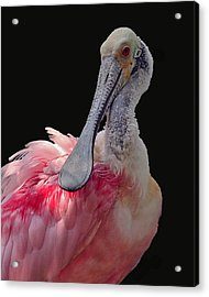 Roseate Spoonbill Acrylic Print by Larry Linton