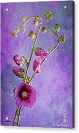 Roses  Acrylic Print by Karo Evans