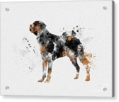 Rottweiler Acrylic Print by Rebecca Jenkins