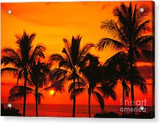 Row Of Palms Acrylic Print by Bill Schildge - Printscapes