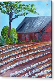 Rows Of Cotton Acrylic Print by Eloise Schneider