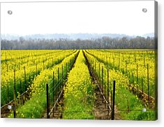 Rows Of Wild Mustard Acrylic Print by Tom Reynen