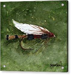 Royal Coachman Wet Fly Acrylic Print by Sean Seal