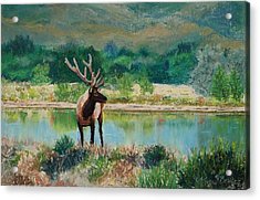 Royal Velvet Acrylic Print by Mary Benke
