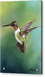 Ruby Throated Hummingbird Acrylic Print by Charlotte Yealey