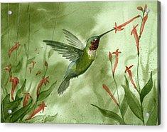 Ruby Throated Hummingbird Acrylic Print by Sean Seal