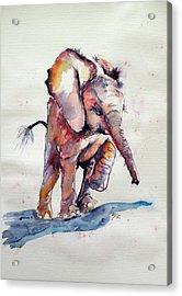 Running Elephant Baby Acrylic Print by Kovacs Anna Brigitta
