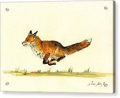 Running Red Fox Acrylic Print by Juan  Bosco