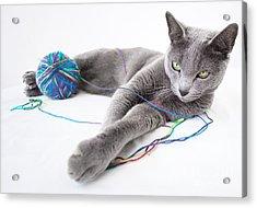 Russian Blue Acrylic Print by Nailia Schwarz