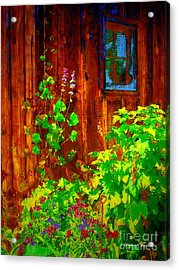 Rustic Summer Shed Acrylic Print by Christine S Zipps