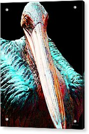 Rusty - Pelican Art Painting By Sharon Cummings Acrylic Print by Sharon Cummings