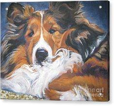 Sable Shetland Sheepdog Acrylic Print by Lee Ann Shepard