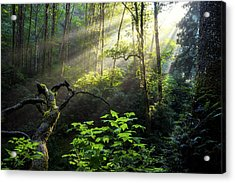 Sacred Light Acrylic Print by Chad Dutson
