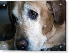 Sad Pup Acrylic Print by Kristin Smith