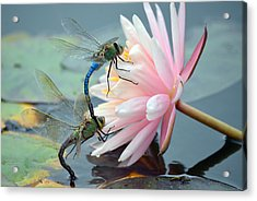 Safe Place To Land Acrylic Print by Fraida Gutovich