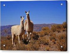 Salar De Uyuni Tour 5 Acrylic Print by Skip Hunt