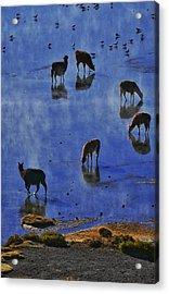 Salar De Uyuni Tour 59 Acrylic Print by Skip Hunt