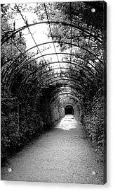 Salzburg Vine Tunnel - By Linda Woods Acrylic Print by Linda Woods