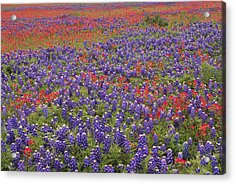 Sand Bluebonnet And Paintbrush Acrylic Print by Tim Fitzharris