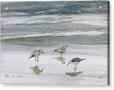 Sandpipers Acrylic Print by Julianne Felton